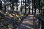 A Boardwalk with Handrails on One Side