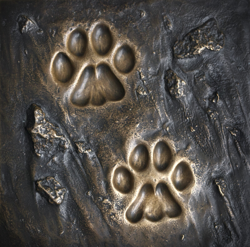 A Bronze Plaque Showing Bobcat Tracks