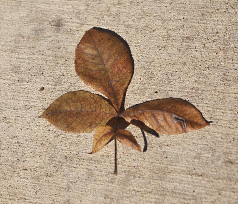 A Brown Leaf on a Concrete Walkway