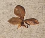 A Brown Leaf on a Concrete Walkway
