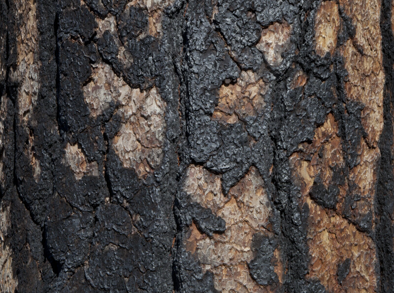 A Burned Tree Trunk