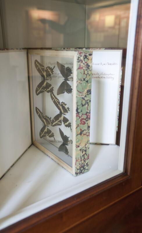 A Butterfly Case