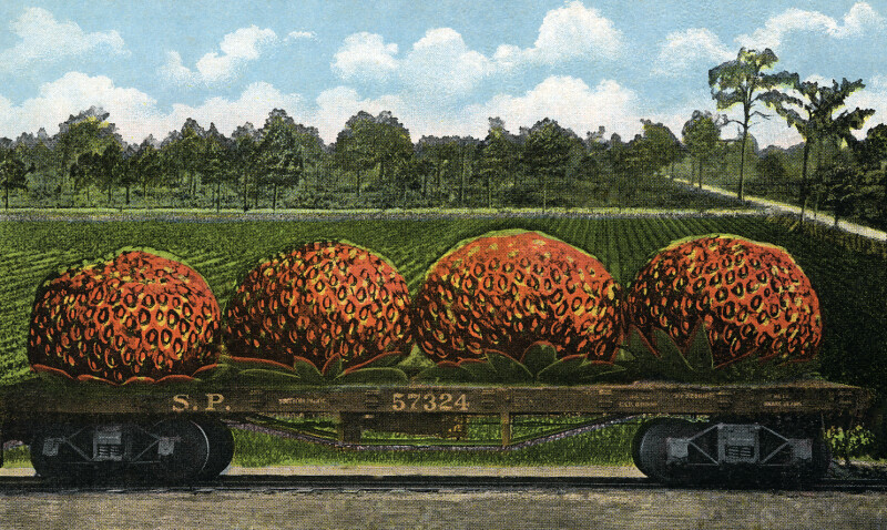 A Carload of Strawberries from Florida
