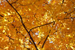 A Close-Up of a Tree with Yellow Leaves