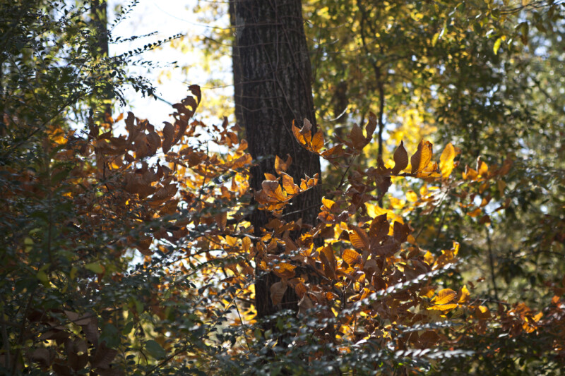 A Close-Up of Autumn Leaves at Corinth Contraband Camp