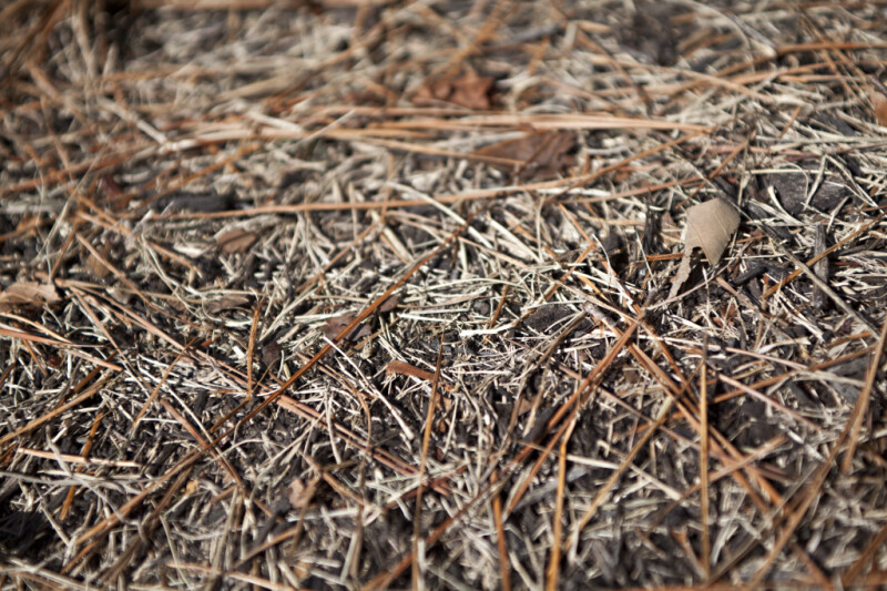 A Close-Up of Brown Pine Needles and Dried Grass