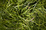 A Close-Up of Grass Growing in a Yard