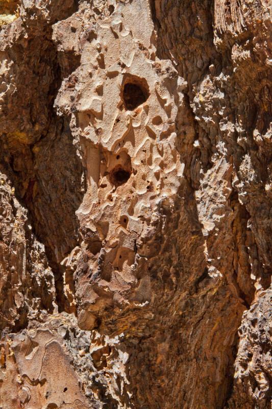 A Closer View of Rough, Reddish-Brown Tree Bark