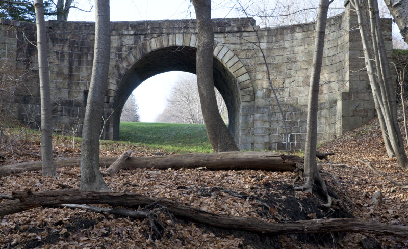 A Dead Tree near the Skew Arch Bridge