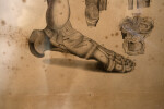 A Drawing of the Bones of the Human Foot