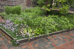 A Garden at the Paul Revere House