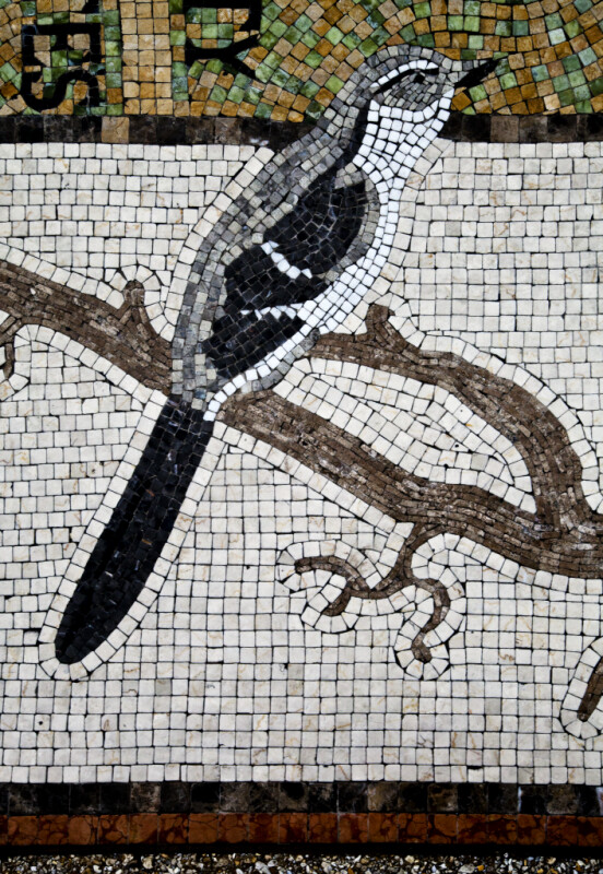 A Gray and White Bird in a Mosaic