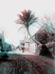 A House with a Palm Garden