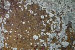 A Lichen Encrusted Stone Surface