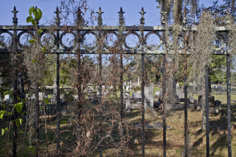 A Metal Fence Draped with Spanish Moss