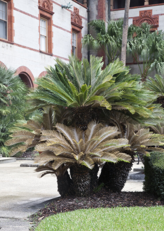 A Palm Tree in a Hotel Courtyard