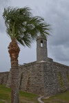 A Palm Tree near the Northeastern Bastion of Castillo de San Marcos