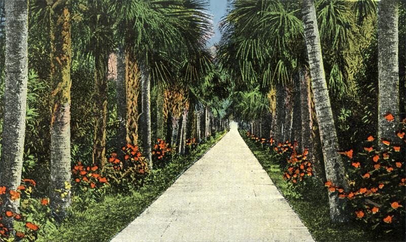 A Palm Walk