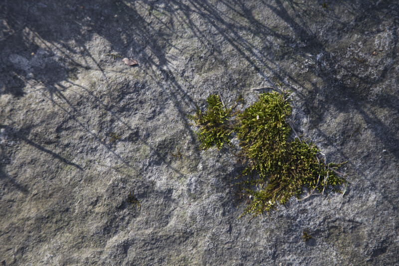 A Patch of Moss on a Rock