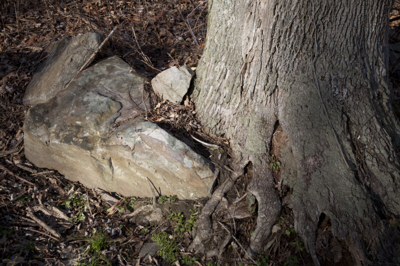 A Rock near the Roots of a Tree