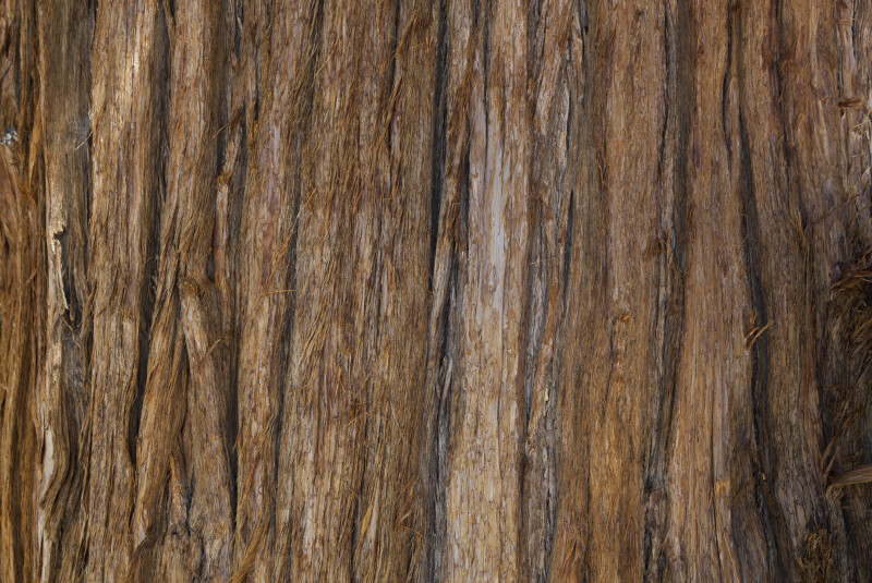 A Rough Reddish-Brown Bark Surface