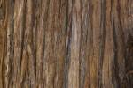 A Rough Reddish-Brown Bark Surface