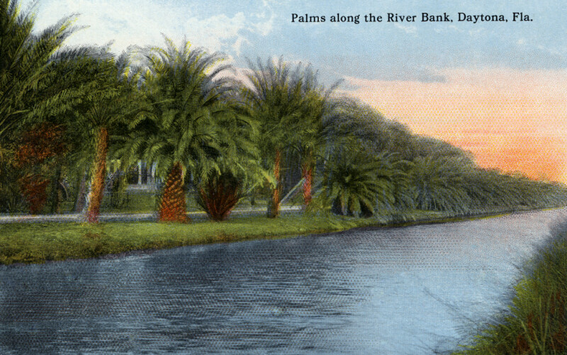 A Row of Palms Along the River Bank