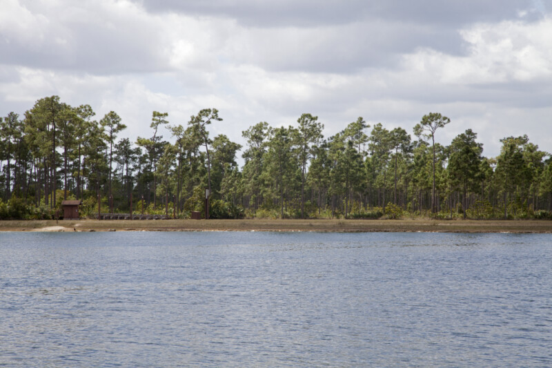 A Row of Pine Trees on the Shore of Long Pine Key