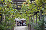 A Rustic Arbor with Plants