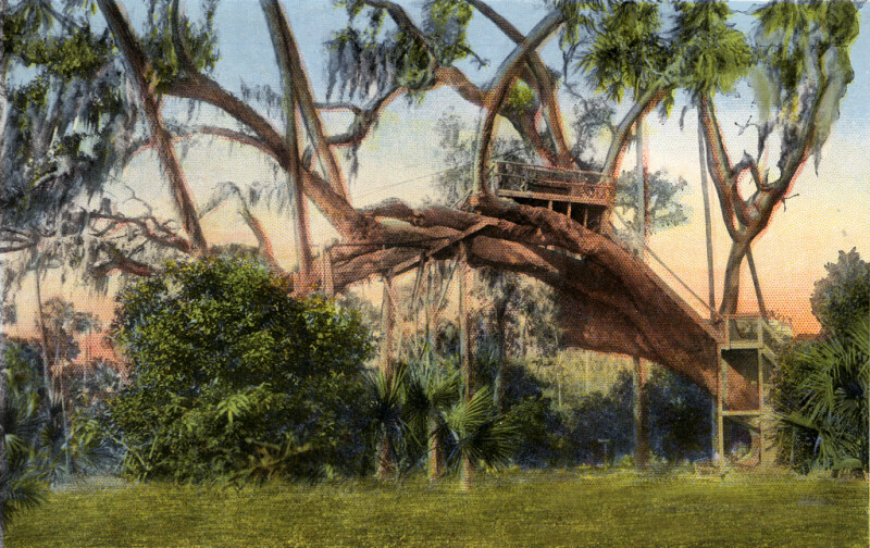 A Rustic Seat in a Big Tree, Daytona, Florida