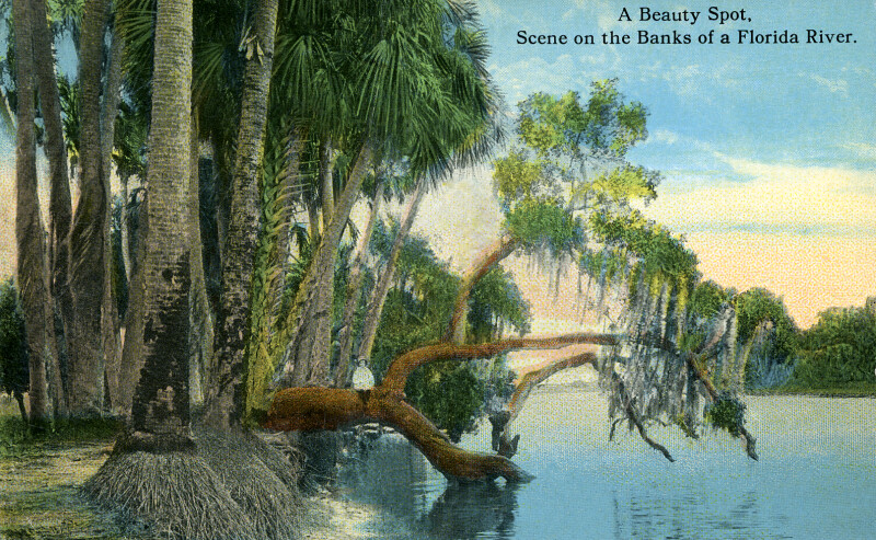 A Scene on the Banks of a Florida River