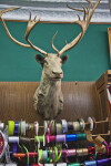 A Taxidermic Mount on the Wall of a Drugstore