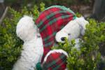 A Teddy Bear in a Bush