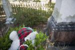 A Teddy Bear Mourner
