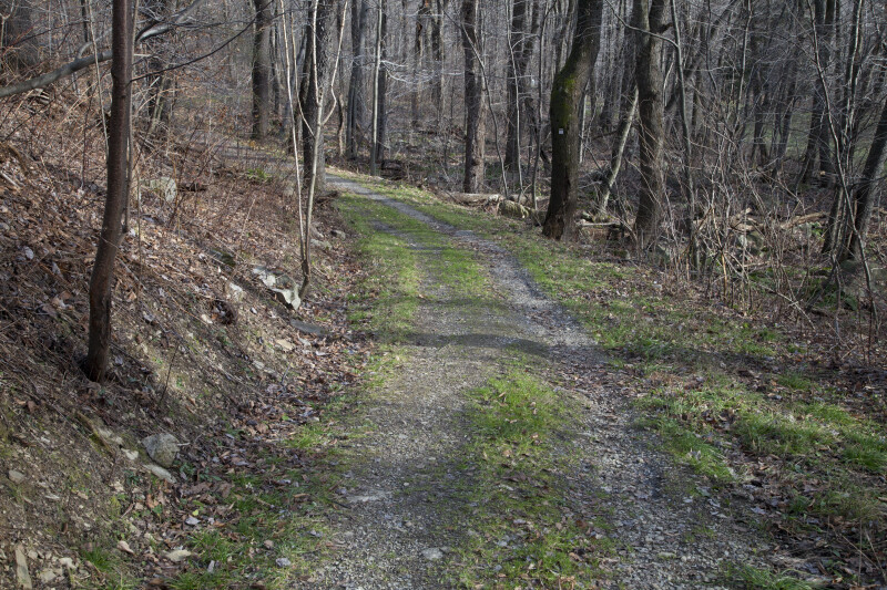 A Trail through the Woods