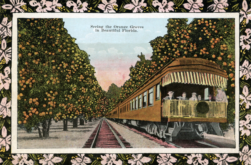 A Train in the Orange Grove