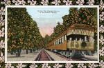 A Train in the Orange Grove
