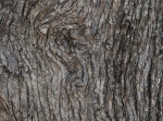 A Tree Bark Swirl