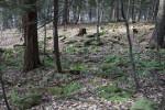 A Tree Stump on a Hill