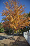 A Tree with Many Orange Leaves