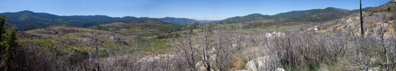 A Valley Recovering from a Fire