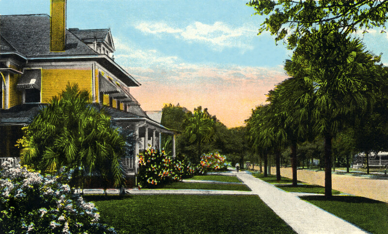 A View of Plant Avenue