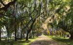 A View of Ridgewood Avenue, Daytona, Florida