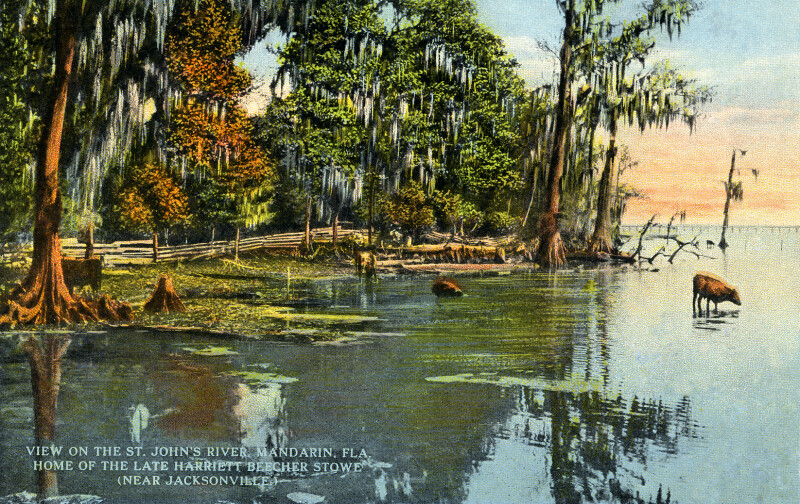 A View of the St. Johns River, Home of the Late Harriet Beecher Stowe