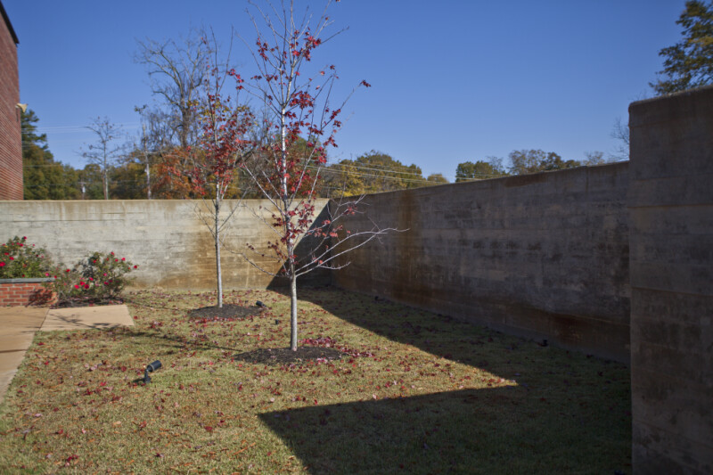A View of Two Sapling Growing in a Grassy Courtyard