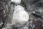 A White Stone in a Dark Matrix