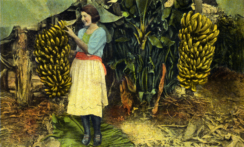 A Woman Picks a Banana Straight from the Tree