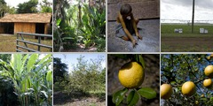 Agriculture photographs