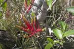 Air Plant Flowers