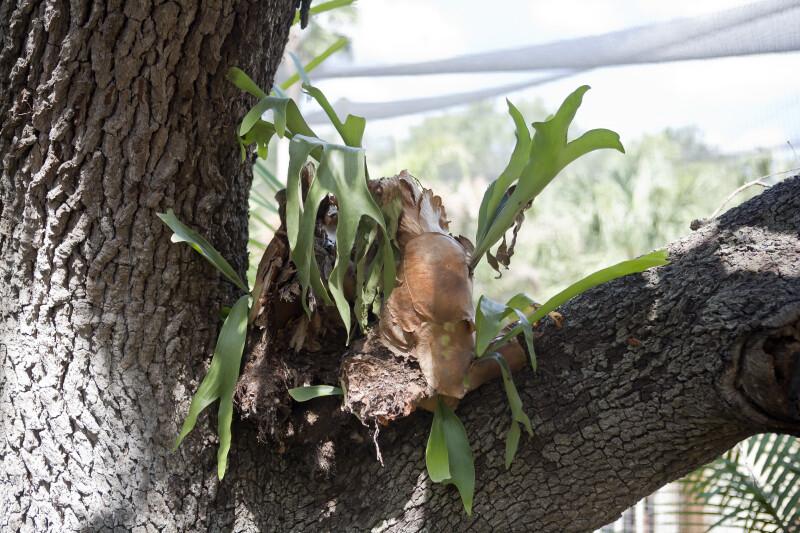Air Plant on Tree